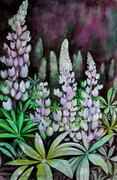 Lupines Galore