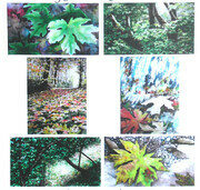 Maple Tree Cards
